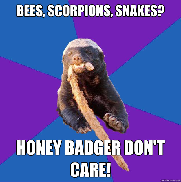 bees, scorpions, snakes? Honey badger don't care!