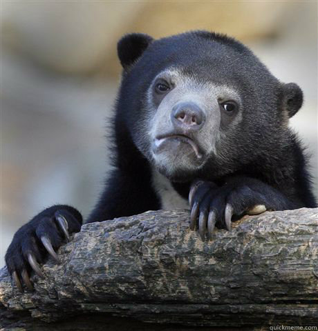 -    Confession Bear
