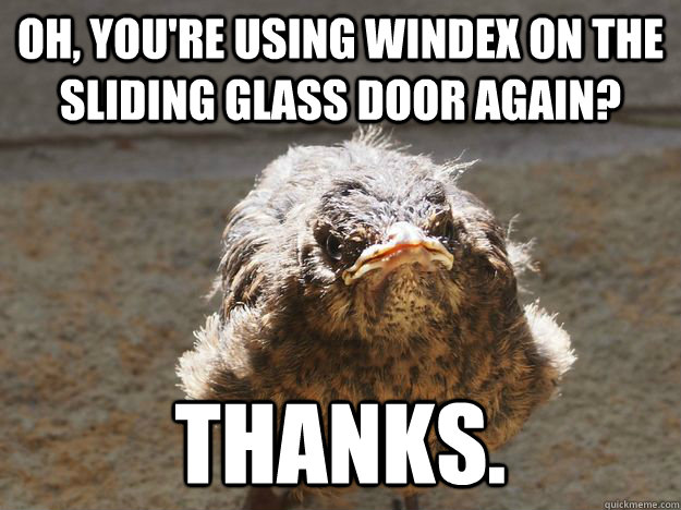 Oh, you're using windex on the sliding glass door again? Thanks.