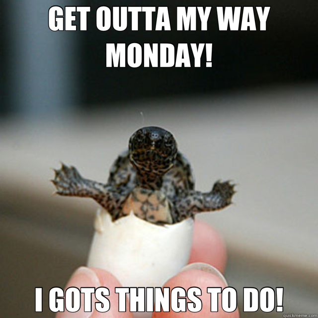 GET OUTTA MY WAY MONDAY! I GOTS THINGS TO DO!  turtle