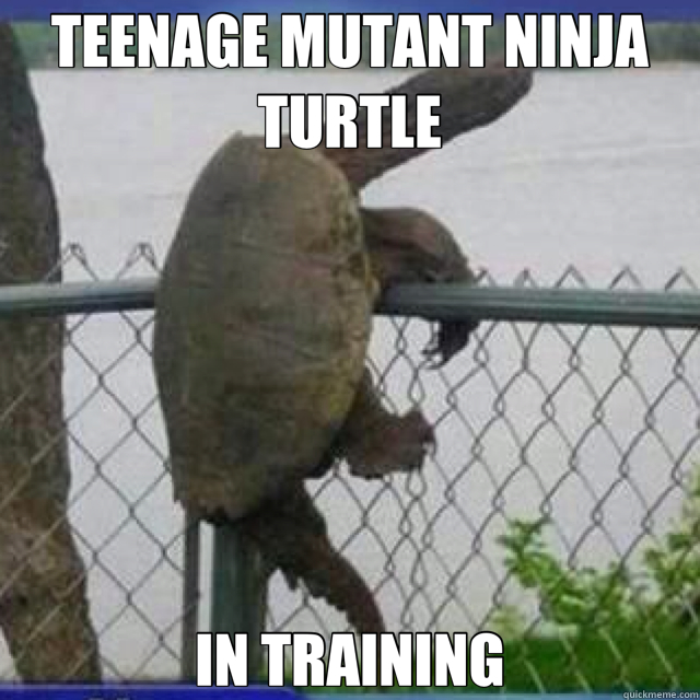 Ninja Turtle Meme Teenage Mutant Ninja Turtle in