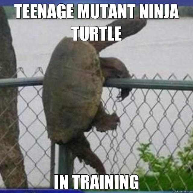 TEENAGE MUTANT NINJA TURTLE IN TRAINING  turtle