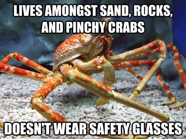 Lives amongst sand, rocks, and pinchy crabs  Doesn't wear safety glasses
