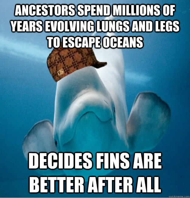 Ancestors spend millions of years evolving lungs and legs to escape oceans Decides fins are better after all - Ancestors spend millions of years evolving lungs and legs to escape oceans Decides fins are better after all  Scumbag whale