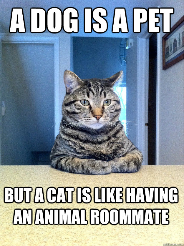 A dog is a pet But a cat is like having an animal roommate - A dog is a pet But a cat is like having an animal roommate  Table top cat