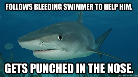Follows bleeding swimmer to help him. Gets punched in the nose. - Follows bleeding swimmer to help him. Gets punched in the nose.  Misunderstood Shark Misunderstood Shark