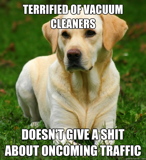 terrified of vacuum cleaners doesn't give a shit about oncoming traffic - terrified of vacuum cleaners doesn't give a shit about oncoming traffic  Dog Logic