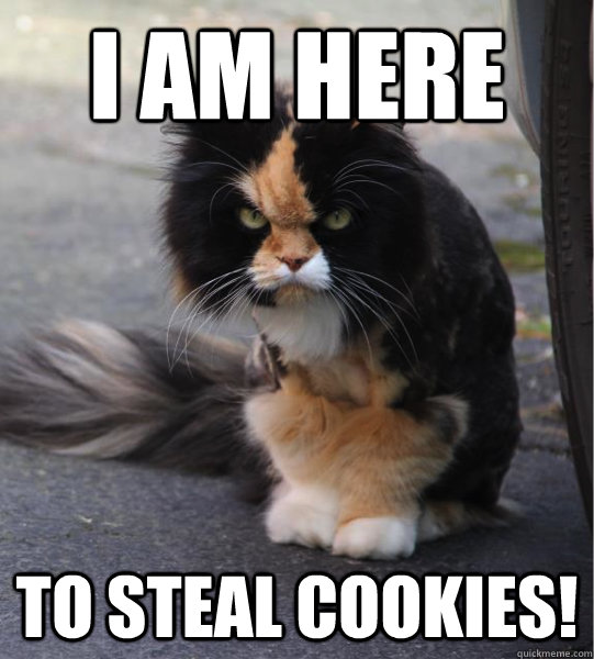I am here to steal cookies!  Evil Cat