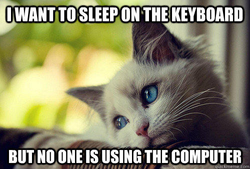 I want to sleep on the keyboard but no one is using the computer - I want to sleep on the keyboard but no one is using the computer  First World Problems Cat