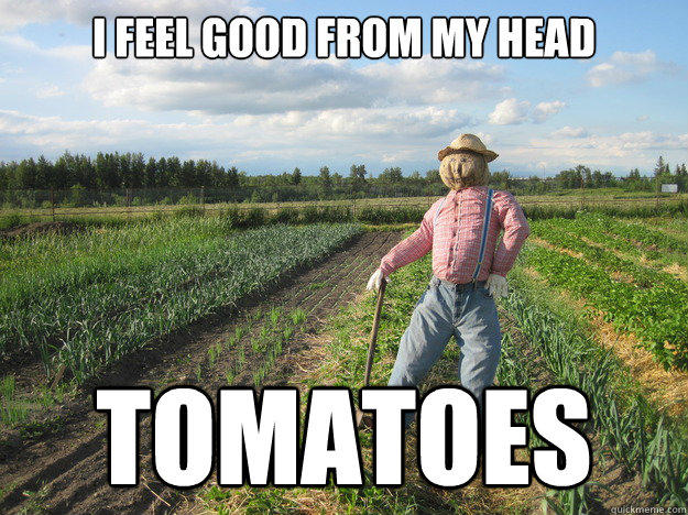 I feel good from my head tomatoes  Scarecrow