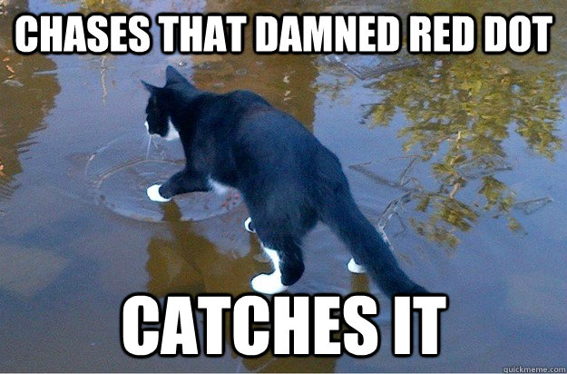 Chases that damned red dot Catches it