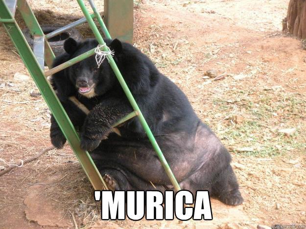 'murica -  'murica  Obese Bear