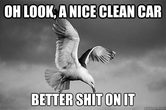 Oh look, a nice clean car Better shit on it - Oh look, a nice clean car Better shit on it  Bird Logic