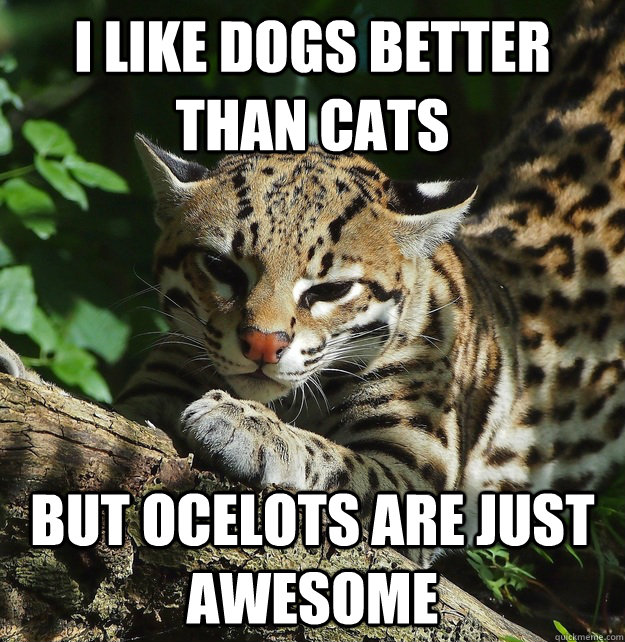 I like dogs better than cats But Ocelots are just awesome ...