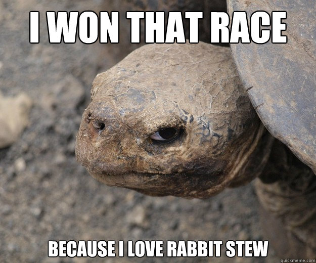 I won that race because I love rabbit stew - I won that race because I love rabbit stew  Insanity Tortoise
