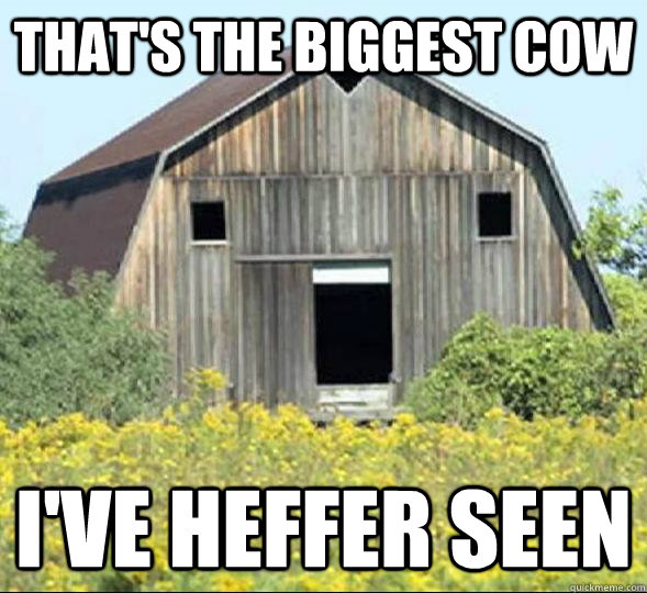 that's the biggest cow i've heffer seen  - that's the biggest cow i've heffer seen   Surprised Barn