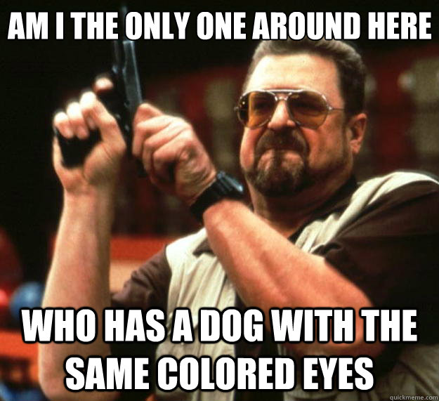 Am I the only one around here who has a dog with the same colored eyes - Am I the only one around here who has a dog with the same colored eyes  Big Lebowski