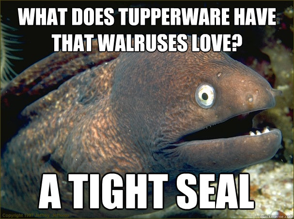 What does tupperware have that walruses love? A tight seal - What does tupperware have that walruses love? A tight seal  Bad Joke Eel