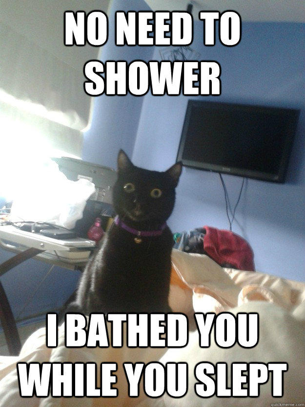 no need to shower i bathed you while you slept  overly attached cat