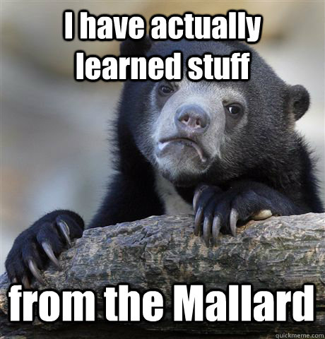 I have actually learned stuff from the Mallard - I have actually learned stuff from the Mallard  Confession Bear