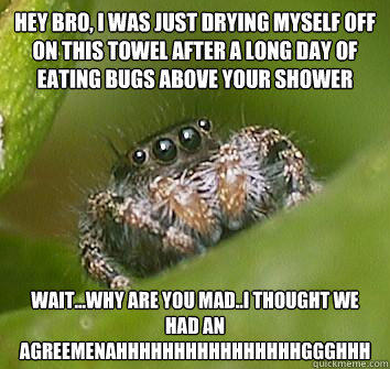 hey bro, i was just drying myself off on this towel after a long day of eating bugs above your shower wait...why are you mad..i thought we had an agreemenAHHHHHHHHHHHHHHHHGGGHHH  Misunderstood Spider