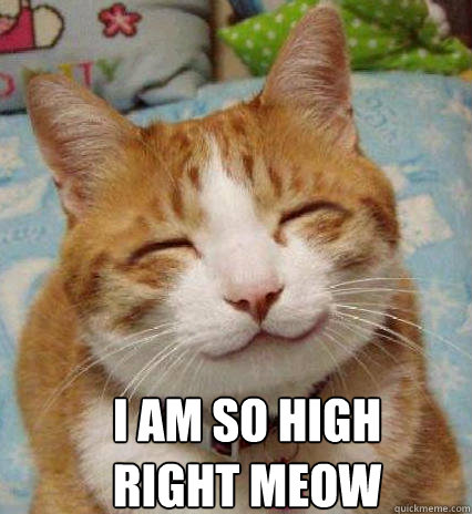 I AM SO HIGH RIGHT MEOW