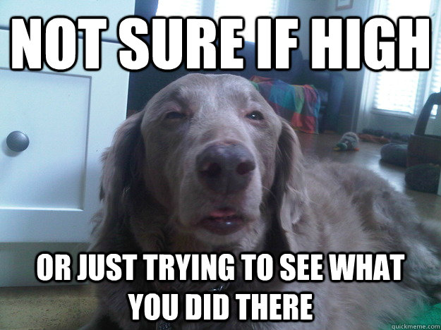 NOT SURE IF HIGH OR JUST TRYING TO SEE WHAT YOU DID THERE - NOT SURE IF HIGH OR JUST TRYING TO SEE WHAT YOU DID THERE  10 Dog