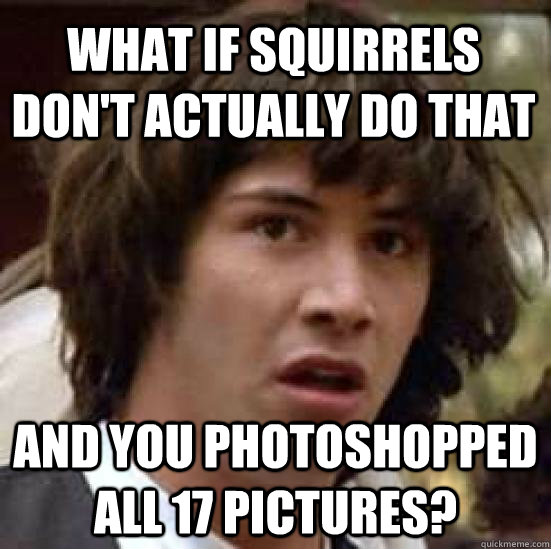 What if squirrels don't actually do that and you photoshopped all 17 pictures? - What if squirrels don't actually do that and you photoshopped all 17 pictures?  Misc