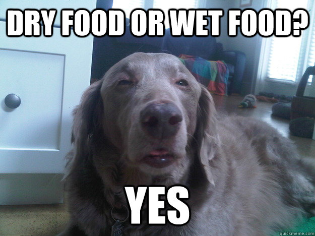 dry food or wet food? yes - dry food or wet food? yes  10 Dog