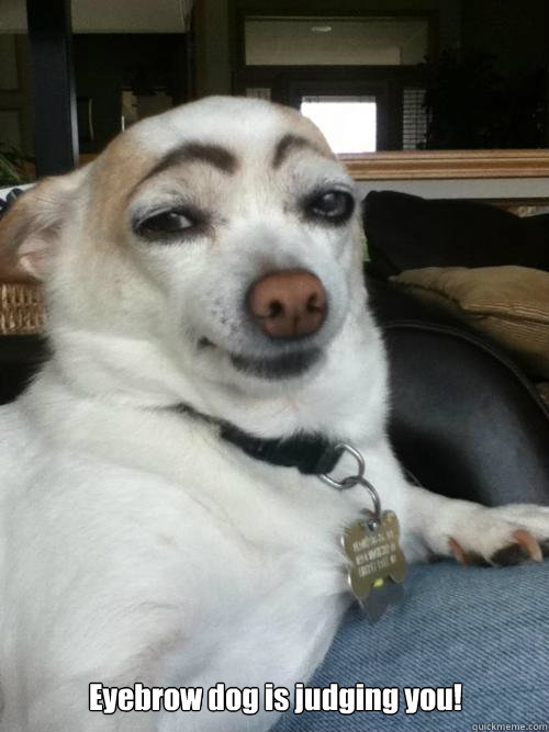 Eyebrow dog is judging you!