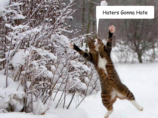 Haters Gonna Hate - Haters Gonna Hate  Cat In Snow