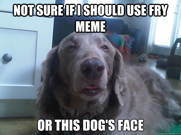 Not sure if I should use fry meme Or this dog's face - Not sure if I should use fry meme Or this dog's face  10 Dog