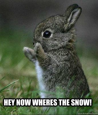 Hey now wheres the SNOW! - Hey now wheres the SNOW!  Cute bunny