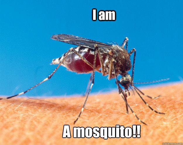 I am  A mosquito!!