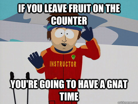 if you leave fruit on the counter you're going to have a gnat time - if you leave fruit on the counter you're going to have a gnat time  Youre gonna have a bad time
