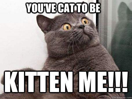 You've cat to be KITTEN ME!!!