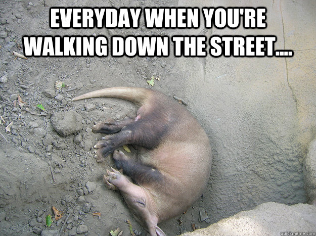 Dead Aardvark