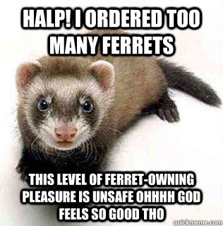 HALP! I ORDERED TOO MANY FERRETS THIS LEVEL OF FERRET-OWNING PLEASURE IS UNSAFE OHHHH GOD FEELS SO GOOD THO - HALP! I ORDERED TOO MANY FERRETS THIS LEVEL OF FERRET-OWNING PLEASURE IS UNSAFE OHHHH GOD FEELS SO GOOD THO  Logical Fallacy Ferret