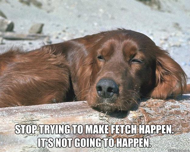 lazy dog meme