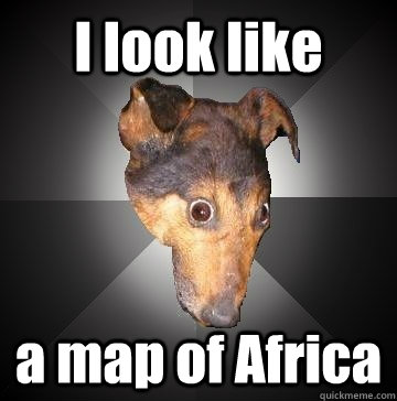 I look like a map of Africa  Depression Dog