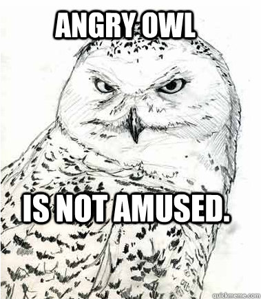 Angry owl Is not amused.  Angry Owl