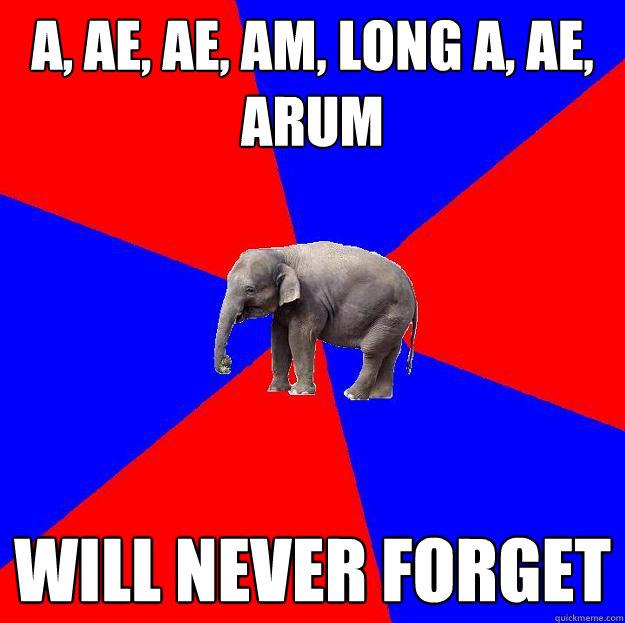 A, AE, AE, AM, LONG A, AE, ARUM WILL NEVER FORGET  - A, AE, AE, AM, LONG A, AE, ARUM WILL NEVER FORGET   Foreign language elephant