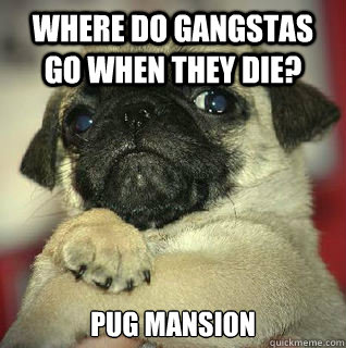 where do gangstas go when they die?  pug mansion - where do gangstas go when they die?  pug mansion  SMUG PUG
