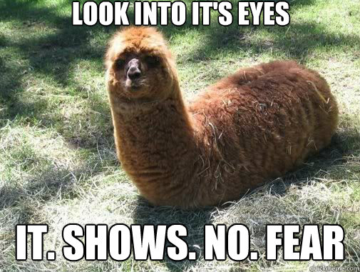 look into it's eyes It. Shows. No. FEAR - look into it's eyes It. Shows. No. FEAR  Alpacapillar