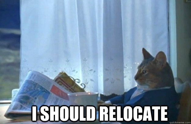 I should relocate - I should relocate  Sophisticated Cat