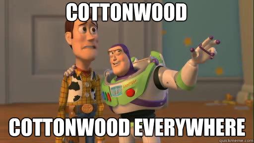 Cottonwood Cottonwood everywhere - Cottonwood Cottonwood everywhere  Everywhere