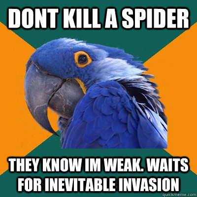 Dont kill a spider They know Im weak. Waits for inevitable invasion - Dont kill a spider They know Im weak. Waits for inevitable invasion  Paranoid Parrot