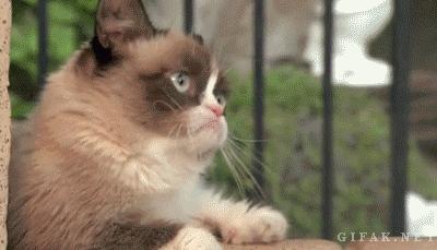 Grumpy Cat found her boyfriend at Disneyland