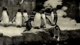 Portal Penguin
